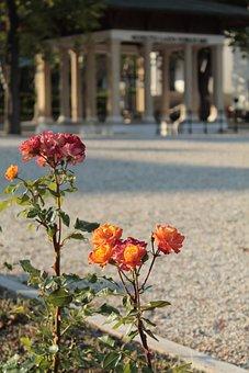 Balatonfüred, Kossuth Source, Rose