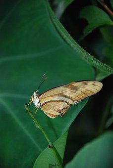 Dryas Julia A Julia Longwing, Orange, Butterfly, Bug