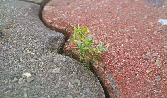 Life, Determination, Bricks, Perseverance, Nature