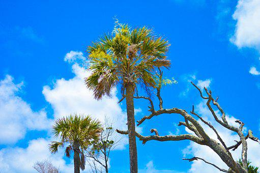 Folly Beach, Sky, Palm Trees