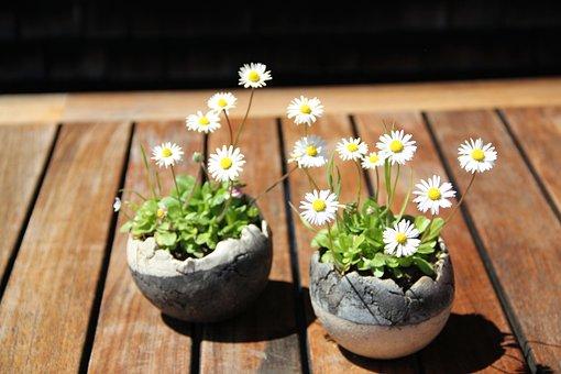 Daisy, Flower, Flowers, Nature, Blossom, Bloom, Bloom