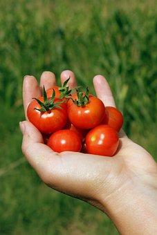 Cherry, Hand, Handheld, Matina, Red, Small, Tomato