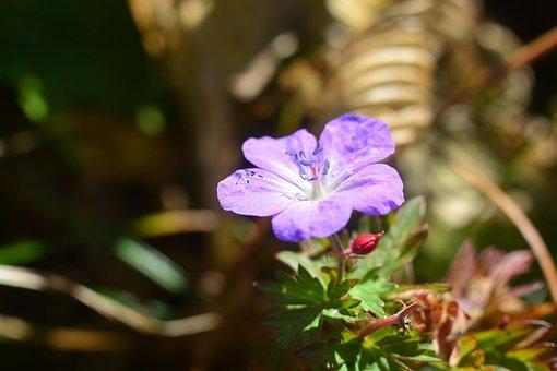 Flowers, Mountain, Mt Amakazari, Outdoors, Japan