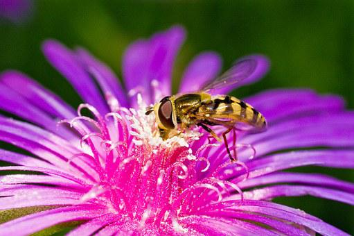 Etc, Insects, Bug, And So On And, Flowers, Affix, Makro