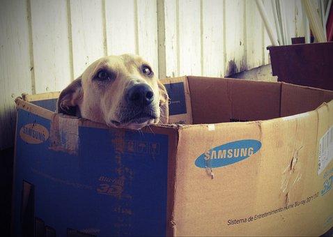 Dog, Box, Doghouse, Dogface, Cardboard Box, Dog House