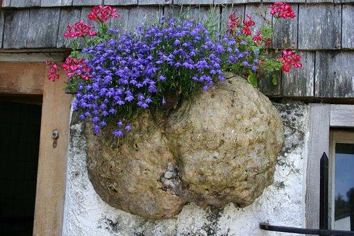 Allgäu, Alpe, Mushroom, Dry Rot, Flowers