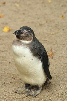 Penguin, Frugal, Sweet, Animal, Zoo, Cute, Nature