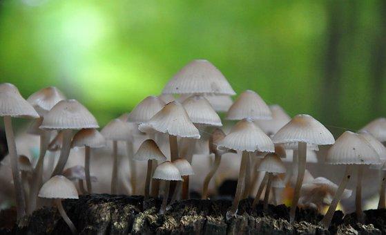Mushroom, Forest, Autumn, Ink Mushrooms