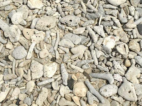 Coral, Coral Stones, Beach, Sand, Texture, Structure