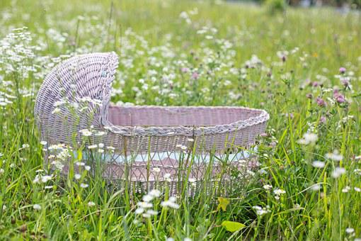 Bassinet, Pink, Spring, Wild Flowers, Flowers, Baby