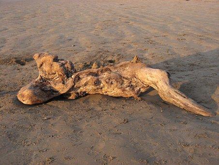 Drift, Wood, Beach, Pendine, Sands, Wales, Weathered