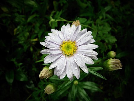 Flowers, Nature, Behold, Yellow, Asteraceae