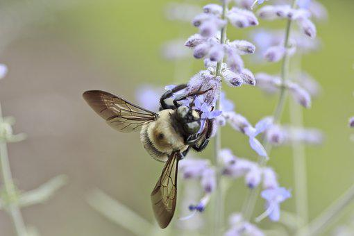 Bee, Flower, Insect, Honey, Nature, Summer, Spring