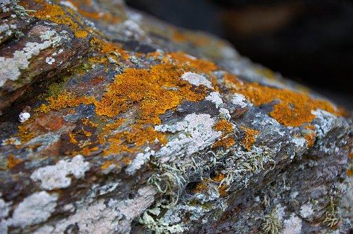 Moss, Rock, Nature, Stone, Green, Idyllic, Fouling