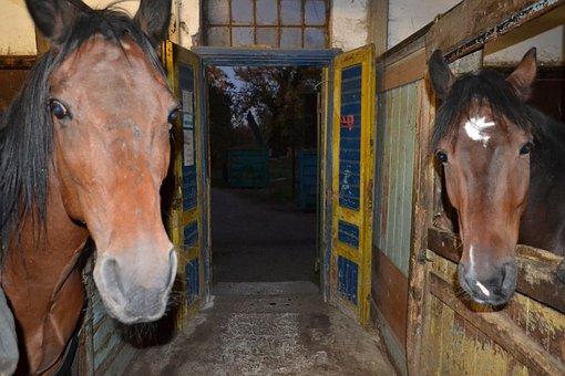 Horses, Animals, Stallion, Mare, Nature, Ride, Wildlife