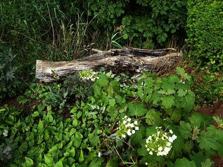Ornamental Garden, Old Tree Trunk, Flower Bed, Nature