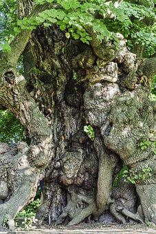 Old Tree, Tree, Artwork, Overgrown, Nature, Forest, Log