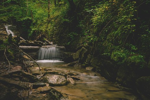 Bach, River, Forest, Water, Nature, Flow, Green, Creek