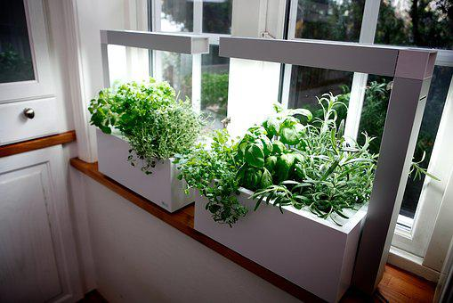 Herb, Growing Herbs, Hydro System, Gift, Conservatory