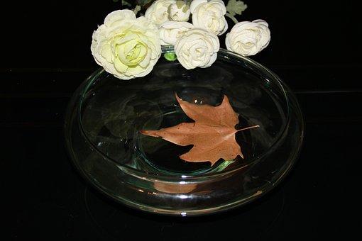 Shell, Herbsblatt, Shells, Leaf, Sheet In The Water