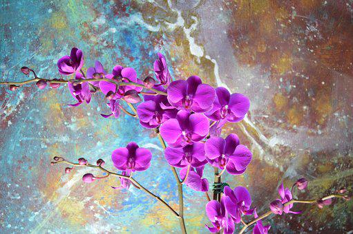Orchid, Magenta, Art, Abstract, Painting, Decorate