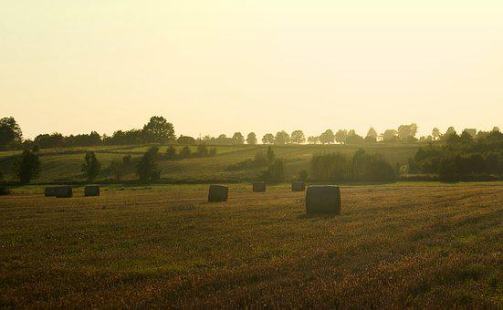 Field, Bales, Landscape, Harvest, Straw, Summer