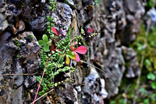 Life, Stone, Nature, Green, Peace, Rock, Balance