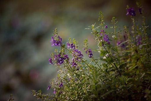 Flowers, Flower, Blossoming, Plant, Spring, Summer