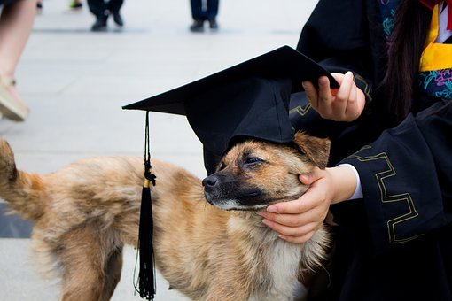 Dog, Graduation Photo, Bachelor Gown, Pets, Hat, Funn