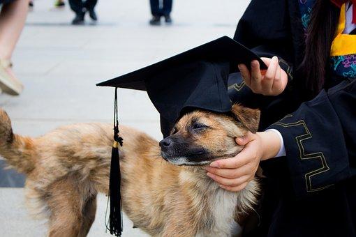Dog, Graduation Photo, Bachelor Gown, Pets, Hat, Funn