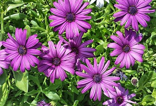 Purple, Nature, Flower, Floral, Petal, Blossom, Plant