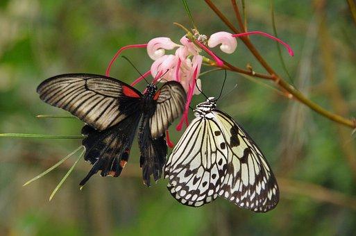 Butterflies, Butterfly, Mariposario De Benalmadena
