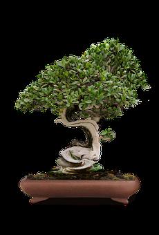 Bonsai, Bonsai Tree, Green Tree, Dwarf Tree, China