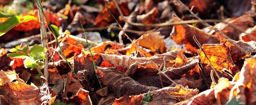 Autumn, Leaves, Fall Color, Nature, Golden Autumn