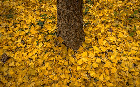 Autumn, Leaves, Bank, Yellow, Wood, Nature, Plants