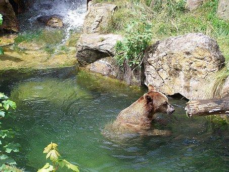 Zoo, Bear, Alpine Zoo, Innsbruck, Brown Bear