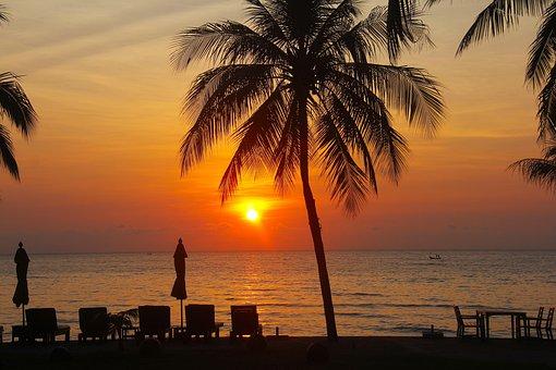 Resort, Hotel, Beach, Tree, Tourists, Vacation, Holiday