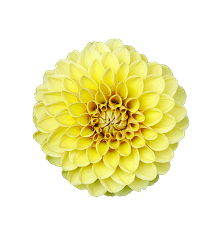Flower, Isolated Flower, Transparent, Natural
