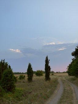 Juniper, Gravel Road, Sunset, Road, Sky, Summer