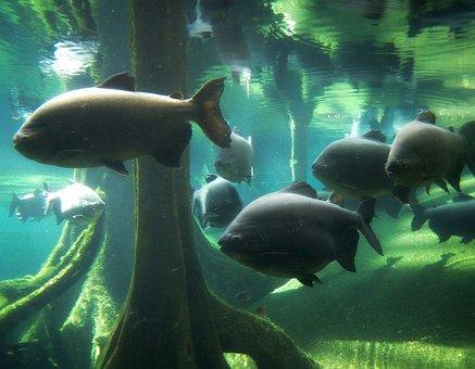 Fish, Aquarium, Mar, Fauna, Underwater, Big Fish