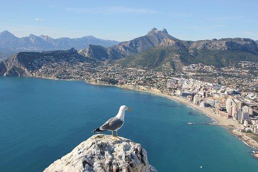 Seagull, Ave, Bird, Calpe, Alicante, Spain