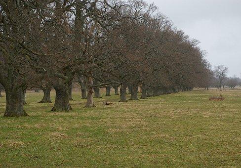 Oak, Oak Trees, Tree, Avenue, Bed, Forward, Tree Crowns