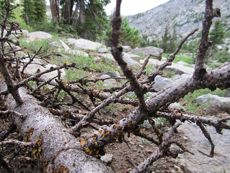 Forest Dieback, Forest Decline, Dead Tree, Wood, Tree