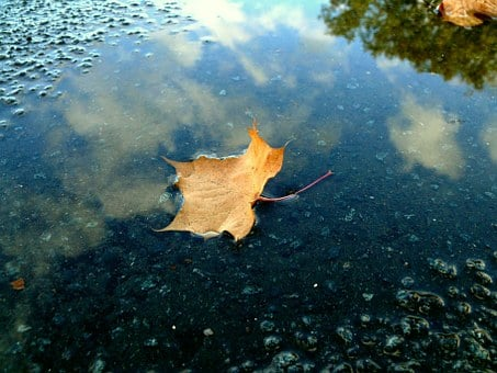 Leaf, Rain, Puddle, Autumn, Mirroring, Wet, Blue, Sky
