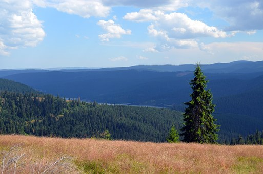 Brad, Height, View, The Apuseni Mountains, Cluj County