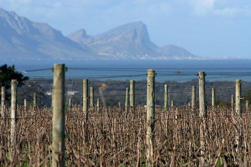 Vineyards, Sea, Wine, Stellenbosch, South Africa