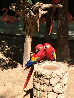 Tropical, Birds, Parrots, Nature, Animal, Colorful
