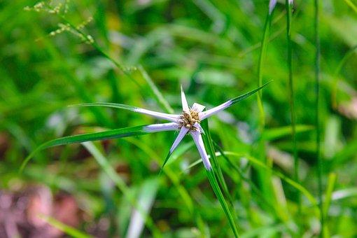 Narure, Flower, Grown Tree