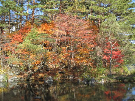 Autumn, Autumnal Leaves, Arboretum, Colorful, Woods