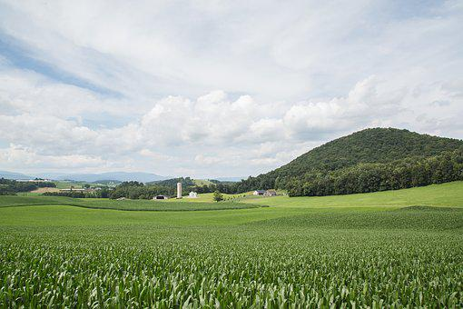 Green, Land, Sky, Blue, Nature, Field, Spring